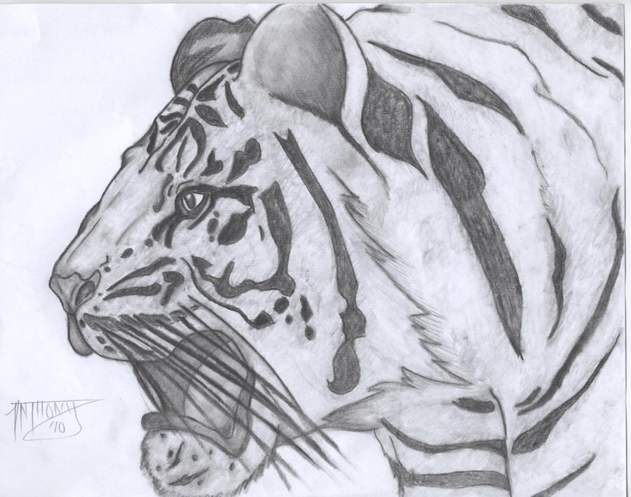 Tiger by shroomstone