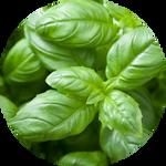 Basil leaf Blessing by AnnieStash