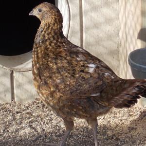 FoxHunter361's Profile Picture
