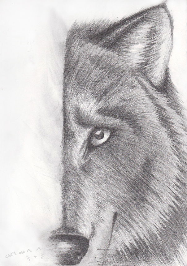 Wolf Sketch by CtrlAltCat
