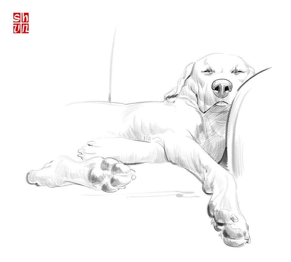 Dog Sketch_01 by Shun-008