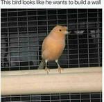 Bird Wall