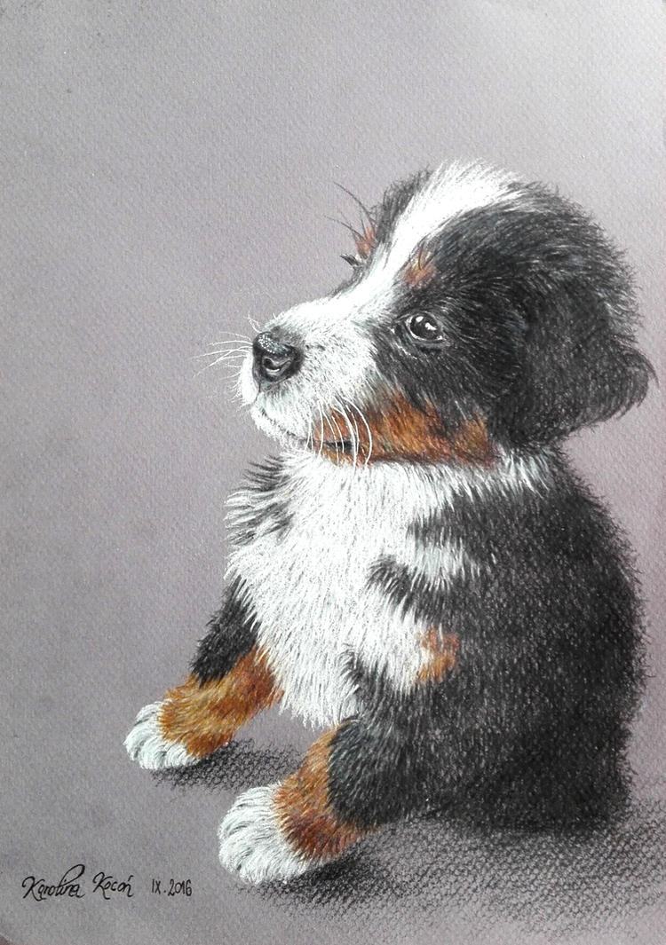My Dog by Carolineys