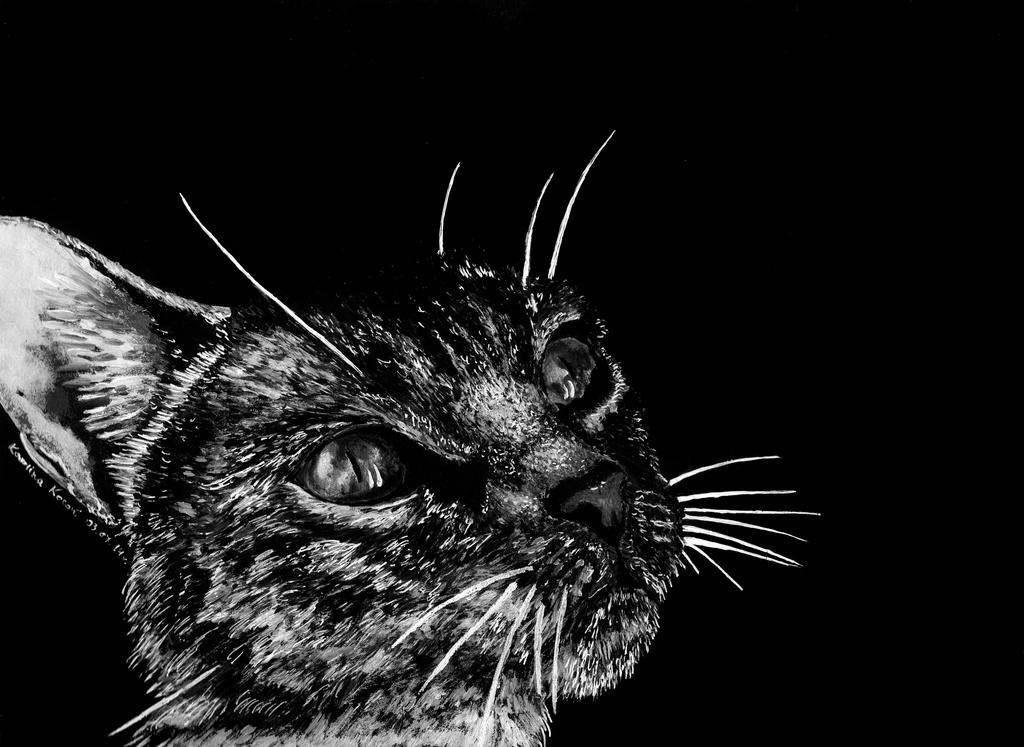 Cat by Carolineys