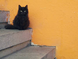A black little furball. by Catist