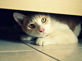Nobody will find me here. by Catist