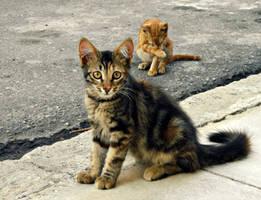 Kittens Everywhere.. by Catist