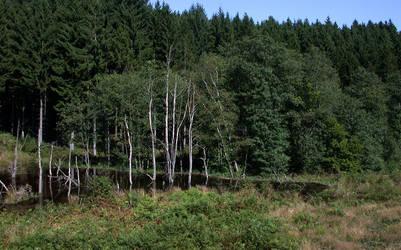 Beavers Valley - Wibrin