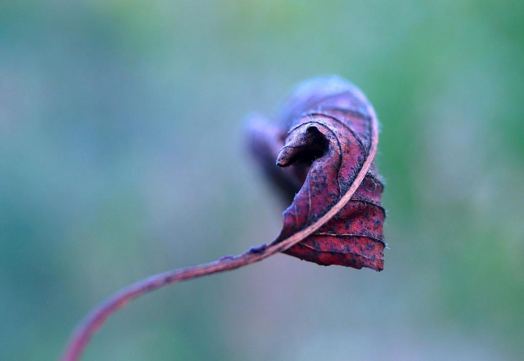 leaffy by mustafahaydar
