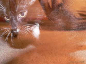 Phantom Cat by Cort-Ellyn
