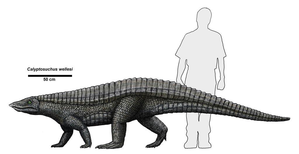 http://fc04.deviantart.net/fs70/i/2013/142/e/f/calyptosuchus_by_typothorax-d668m65.jpg