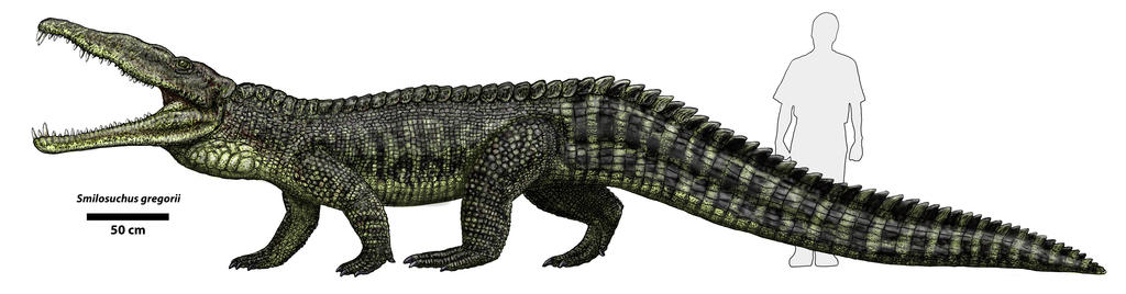 Smilosuchus by Typothorax