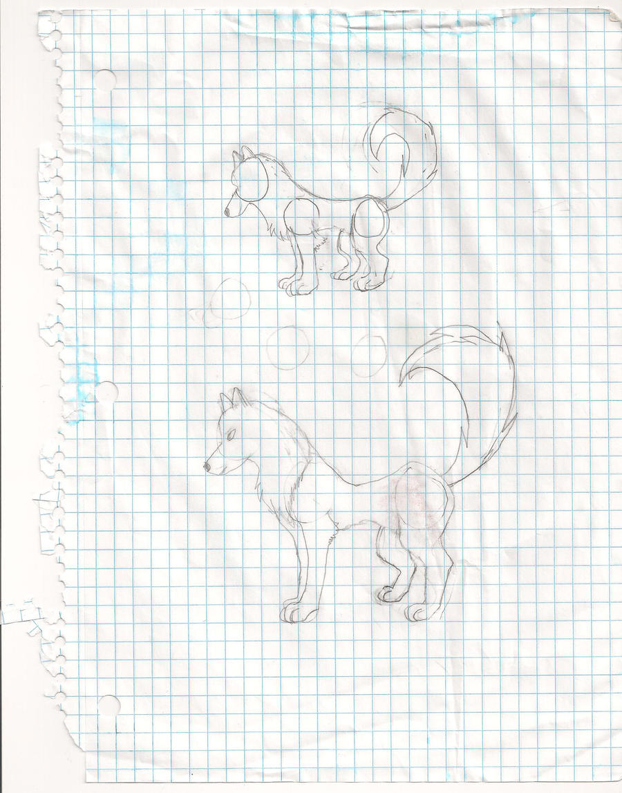 first two wolf sketches