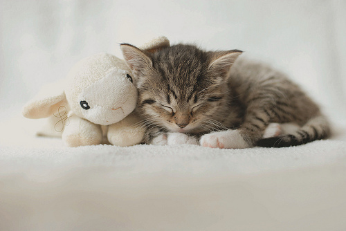 Sleepy time .. by xTearsOfAnAngelx