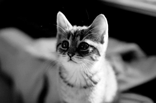 Cat by xTearsOfAnAngelx