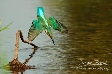 Kingfisher by jjbeggar