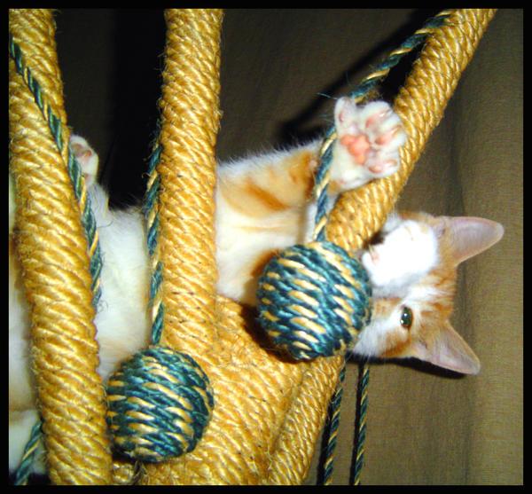 peek-a-boo-Taryn by grrlefx