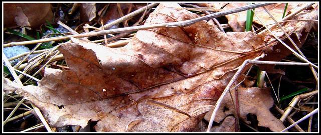 leaf tears by grrlefx
