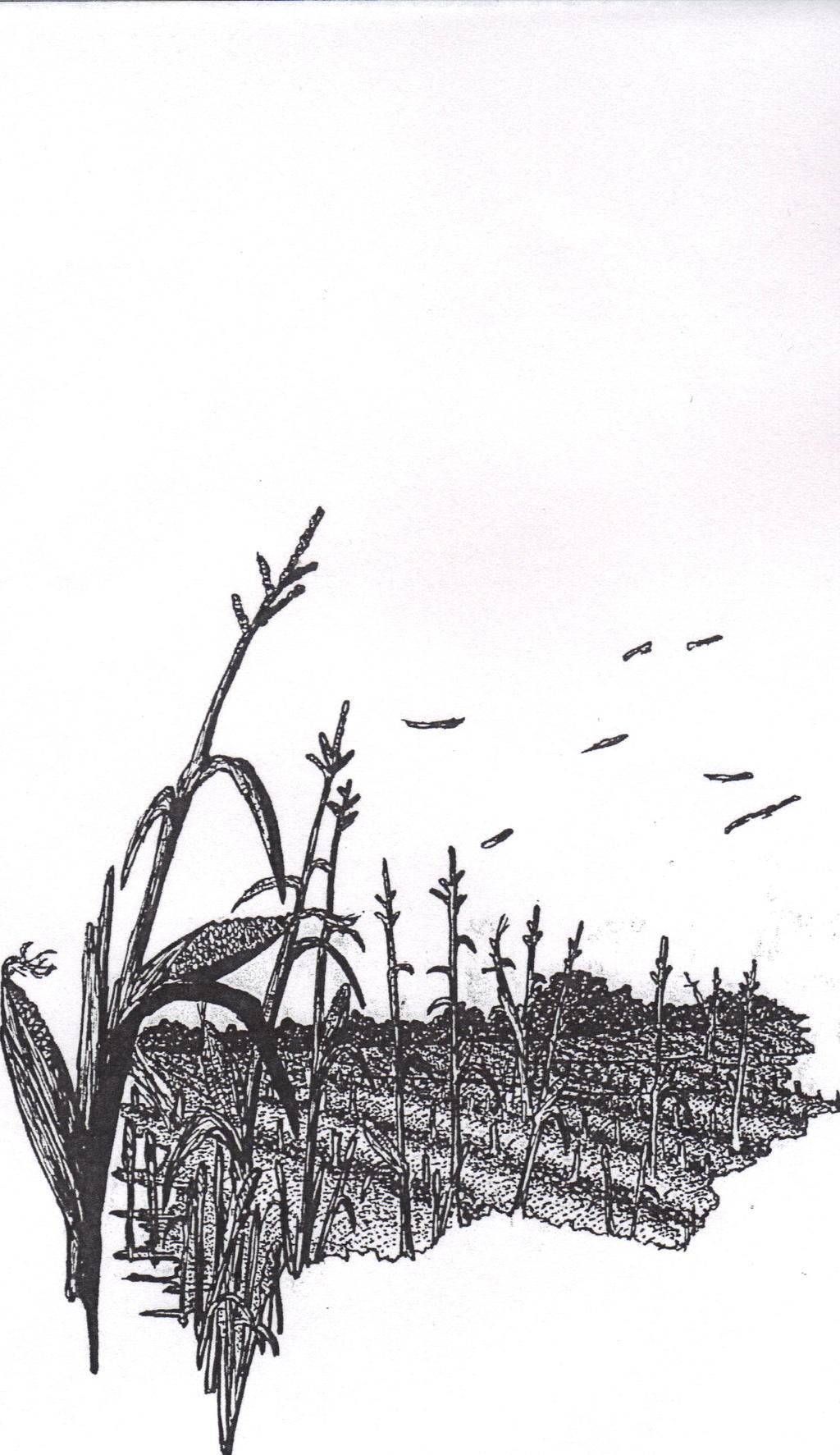 Harvest Scene by jon71966