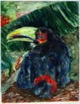 Toucan by Lechtonen