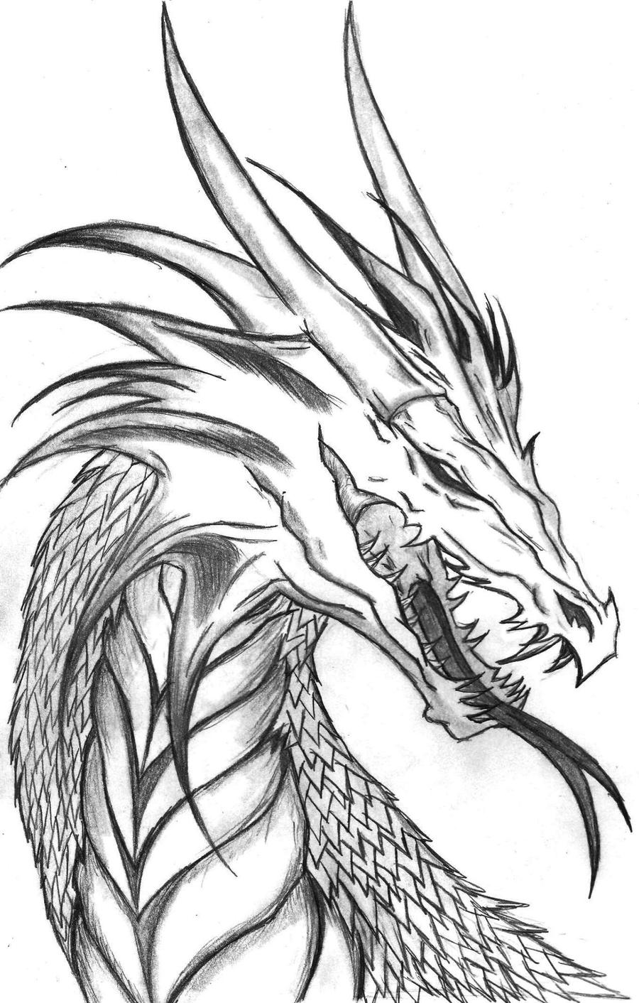 Dragon Head Side Profile By The Musedragon On Deviantart