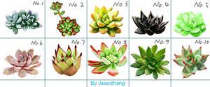 Succulents pixel
