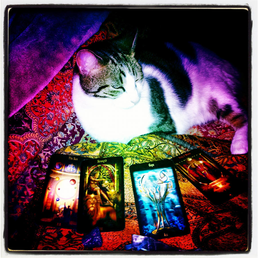 Lazy Card reader by pavingcat on DeviantArt