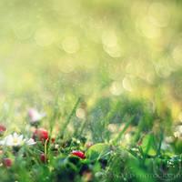 summer rain by Orwald