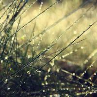 magic grass by Orwald