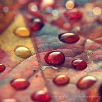 autumn leaf II by Orwald