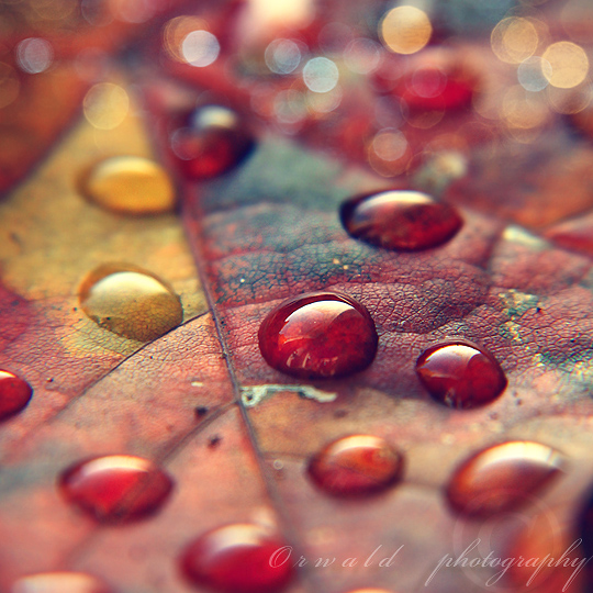 autumn leaf II by Orwald