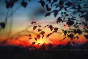 evening lights by Orwald
