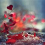 wind of love by Orwald