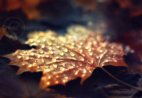 touch of gold by Orwald