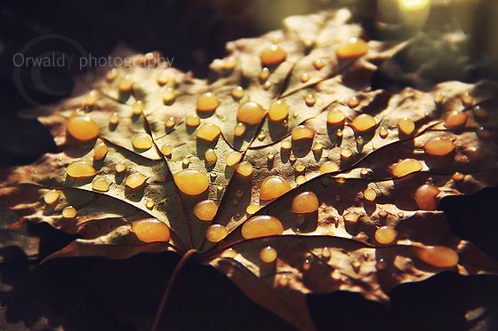 honey dew by Orwald