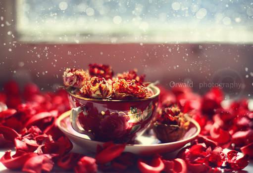 scarlet memories