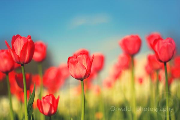 sunny days - II by Orwald