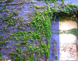 Purple Wall I