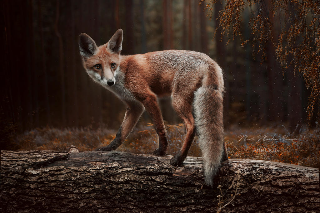 Fox in the forest by Neitin