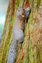 Nutty