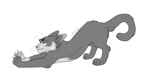 Grey Wolf || commission