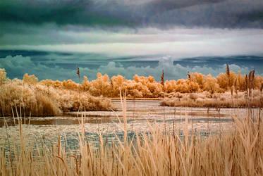 Crosswinds Marsh Infrared by BrittMartin
