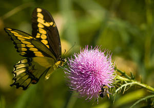 2019-08-23-Crosswinds Butterfly and Bee