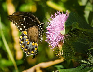 2019-08-23-Crosswinds Butterfly