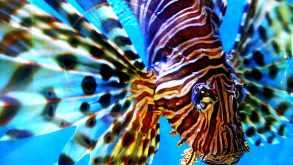 Lionfish by GreyFaerie137