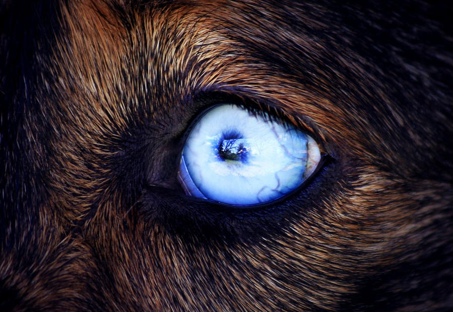Eye See You by shutterwolf87