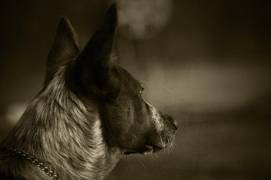 Focused by shutterwolf87