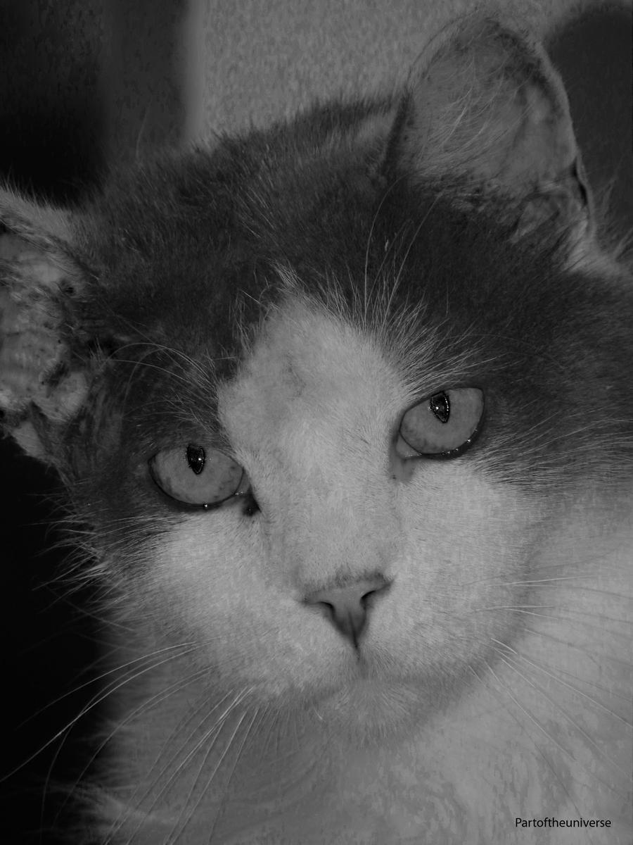 Dontpass's Profile Picture
