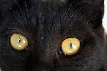 cat black, orange eyes by Dontpass