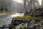stone stream forest stock